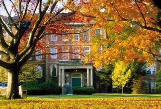纽布伦斯威克大学